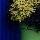 Blue and Green by Joanne  Bradley