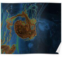 Atlantic Sea Nettle Poster