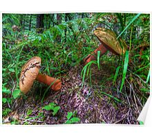 We Just Fell Over ~ Mushrooms ~ Poster