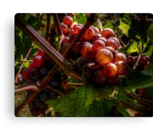 In The Shadows ~ Grapes ~ Canvas Print
