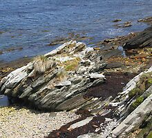 Coastal View: Carcass Island in The Falklands by Carole-Anne