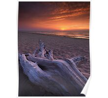 Driftwood on a shore of lake Huron sunset scenery art photo print Poster