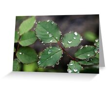 Dew Drops In The Morning IV Greeting Card