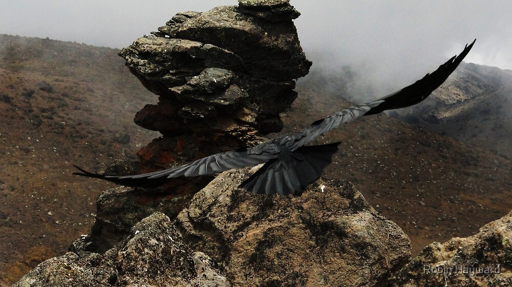 Soaring Mountain Raven by Robin Hayward
