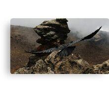 Soaring Mountain Raven Canvas Print