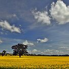 The Canola Tree by S T