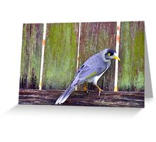 Fence sitting Greeting Card