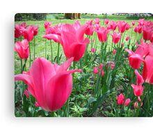 Tulips Tulips Tulips Canvas Print