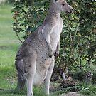 Kangaroo in the Garden by Kymbo