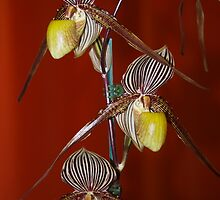 Orchid Trio by Richard Murias
