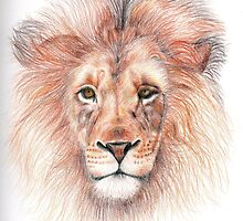 Lion coloured pencil sketch by ChrisNeal