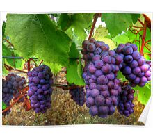 I Be Grape ~ Grapes ~ Poster