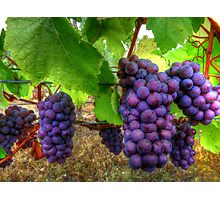 I Be Grape ~ Grapes ~ Photographic Print