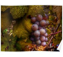 A Closer Look ~ Grapes ~ Poster