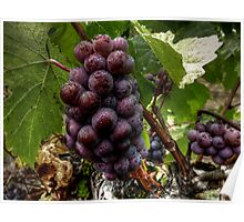 We Group Up ~ Grapes ~ Poster