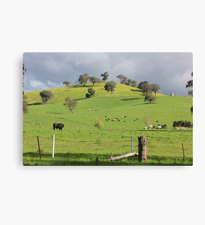 Rolling Hills! Canvas Print
