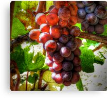 All That Glow ~ Grapes ~ Canvas Print