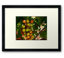 I Am Early ~ Grapes ~ Framed Print