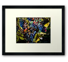 There Seems To Be Some Blue ~ Grapes ~ Framed Print