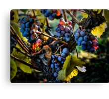 There Seems To Be Some Blue ~ Grapes ~ Canvas Print