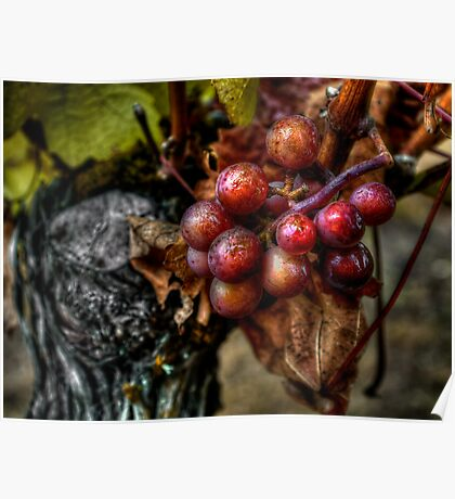 The Crown Of Life ~ Grapes ~ Poster