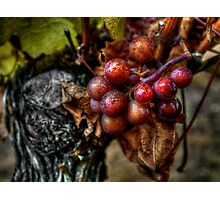 The Crown Of Life ~ Grapes ~ Photographic Print