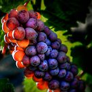 Just Another Bunch ~ Grapes ~ by Charles & Patricia   Harkins ~ Picture Oregon