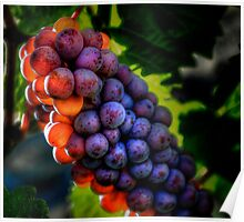 Just Another Bunch ~ Grapes ~ Poster