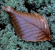 Autumn ! by Elfriede Fulda