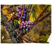 The Root Of Good Things ~ Grapes ~ Poster