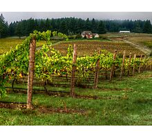House On The Hill ~ Grape Vineyard ~ Photographic Print
