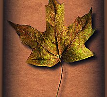 ❦ ❧ FALLEN LEAF A SIGN OF FALL ❦ ❧ by ╰⊰✿ℒᵒᶹᵉ Bonita✿⊱╮ Lalonde✿⊱╮