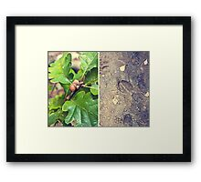 Autumn signs Framed Print