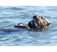 Sea otter dining club Photographic Print