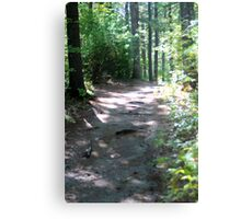 Noanet Woodlands Hiking Trail Metal Print