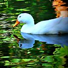 White Duck by tropicalsamuelv