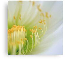 Big White Cactus Flower Macro Abstract 1 Canvas Print