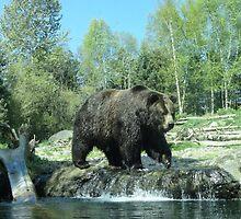 Beasty Bear by Danielle Morin
