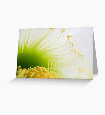 Big White Cactus Flower Macro Abstract 2 Greeting Card