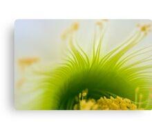 Big White Cactus Flower Macro Abstract 4 Canvas Print