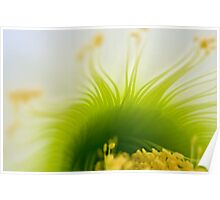 Big White Cactus Flower Macro Abstract 4 Poster