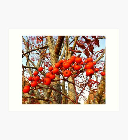 Berries And Bark Art Print