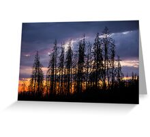 Bettle Kill Pines at Cottonwood Pass Greeting Card