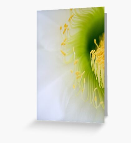 Big White Cactus Flower Macro Abstract 5 Greeting Card