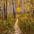 Fall Trail by Craig Forhan