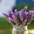 lavender from my garden by Justine Gordon