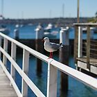 seagull waiting by Justine Gordon
