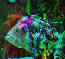 4608 Fish by AnkhaDesh