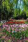 Tulip Top Gardens by yolanda