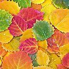 Birch Leaf Kaleidoscope by Beth Mason